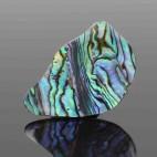 Abalone 11